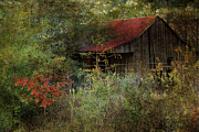 Shed Digital Art Metal Prints - The Shed Metal Print by Dianna Hauf