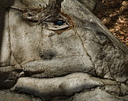 Tree Roots Digital Art Prints - The Stoned Watcher Print by Randall Arthur