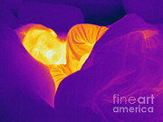 Sleeping Person Posters - Thermogram Of A Sleeping Girl Poster by Ted Kinsman