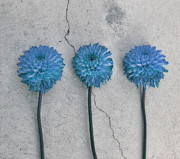 Crack Photos - Three flowers by Kristin Kreet