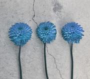 Three Flowers Print by Sven Pfeiffer