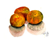 Shrimp Painting Originals - Three Satsumas by Paul Gaj