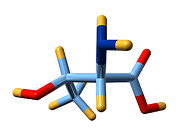Essential Framed Prints - Threonine, Molecular Model Framed Print by Dr Mark J. Winter