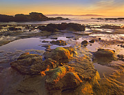 Botanical Beach Framed Prints - Tidepools Exposed At Low Tide Botanical Framed Print by Tim Fitzharris