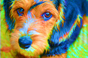 Lovable Digital Art - TieDyed Bailey by John Rosa