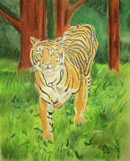 John Keaton Drawings - Tiger On the Prowl by John Keaton
