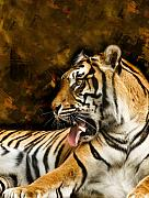 Paws Digital Art Framed Prints - Tiger Framed Print by Svetlana Sewell