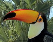 Toucan Digital Art Posters - Toco Toucan Poster by Larry Linton