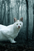White Serval Posters - Tonga Poster by Big Cat Rescue