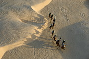 SAHARA Art - Tourists on camel ride in Sahara Desert  by Sami Sarkis