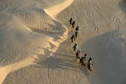 Sami Sarkis - Tourists on camel ride in Sahara Desert