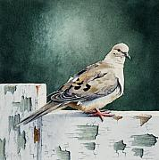 Dove Paintings - Tourterelle no. 2 by Caroline Boyer