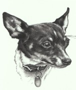 Charcoal Dog Drawing Drawings Posters - Toy Fox Terrier Poster by Pamela Humbargar