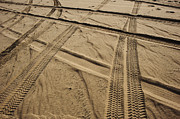 Arid Life Framed Prints - Tracks in . Sand Framed Print by Sam Bloomberg-rissman