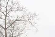 Gal Ashkenazi - Tree against a white sky...