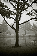 Brown Toned Art Photos - Tree and Pond by Dave Gordon