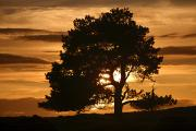 Silhouetted Posters - Tree At Sunset, North Yorkshire, England Poster by John Short