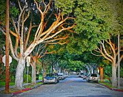 Signed Acrylic Prints - Tree Lined Street Acrylic Print by Chuck Staley