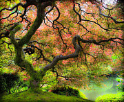Reds Of Autumn Photo Posters - Tree of Beauty Poster by Steve McKinzie