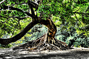 Tree Roots Photo Framed Prints - Tree Of Life Framed Print by Kenneth Mucke