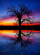 Geographic Prints - Tree of Life Print by Phil Koch