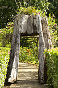 Tree Stump Photos - Tree tunnel by Blink Images