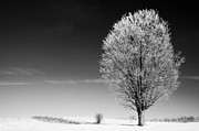Contrasty Acrylic Prints - Tree with Hoar Frost Acrylic Print by Gordon Wood
