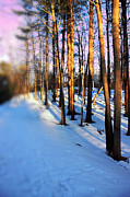 Winter Framed Prints Prints - Trees Photography Print by Mark Ashkenazi