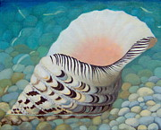 Round Shell Painting Framed Prints - Tritons Trumpet Framed Print by Mirjana Jankovic
