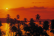 Orangem Tree Photos - Tropical Beach by Juan  Silva