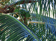 Tropical Photographs Photo Originals - Tropical Blues by Karen Devonne Douglas