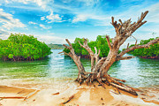 Mangroves Prints - Tropical island Print by MotHaiBaPhoto Prints