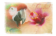 Tropical Birds Of Hawaii Posters - Tropical Nights Poster by Sharon Mau