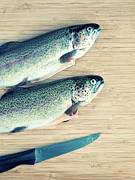 """rainbow Trout"" Framed Prints - Trouts Framed Print by Carlo A"