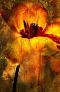 Tulip Print by Bernard Jaubert