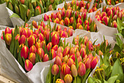 Amsterdam Market Framed Prints - Tulips For Sale At A Flower Market Framed Print by Paul Thompson