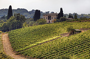 Wine Vineyard Photos - Tuscany by Joana Kruse