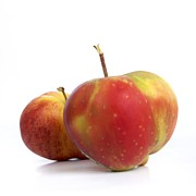 Foodstuffs Photos - Two apples. by Bernard Jaubert