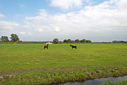 Eemnes Prints - Two horses and a boat in summer Print by Jan Marijs