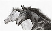 Cowboy Sketches Prints - Two Horses Print by Jack Schilder