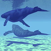 Humpback Whale Digital Art - Two Humpback Whales Swim Together by Corey Ford