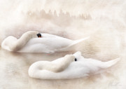 Swans... Digital Art Prints - Two Swans Print by Svetlana Sewell