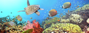 Panoramic Ocean Framed Prints - Underwater panorama Framed Print by MotHaiBaPhoto Prints