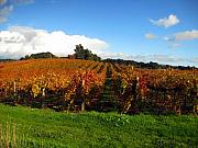 Vineyards Photos - Untitled by Kim Pascu