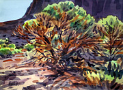 Juniper Paintings - Utah Juniper by Donald Maier
