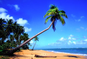 Puerto Rico Prints - Vacia Talega Beach Print by Thomas R Fletcher