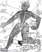 Astrological Signs Prints - Vein Man, Medical Astrology, 17th Print by Science Source
