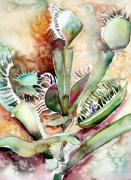 Ecology Originals - Venus Fly Trap by Mindy Newman