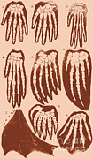 Ernst Heinrich Philipp August Haeckel Prints - Vertebrate Mammal Forefeet, Ernst Print by Science Source