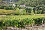 Chianti Hills Photo Framed Prints - Vineyard Framed Print by Jeremy Woodhouse